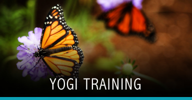 Yogi Teacher Training