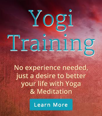 yogi-training